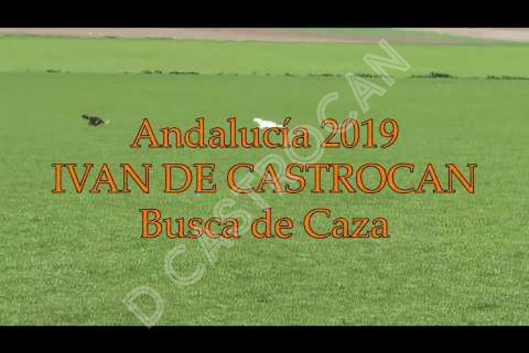 Embedded thumbnail for Semana Internacional de Andalucia 2019
